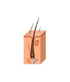 Huile antichute de cheveux 60ml