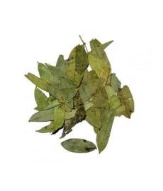 Séné maki feuilles séchées
